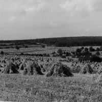 Getreide-Garben