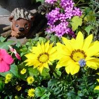Blumenarangement mit Igel